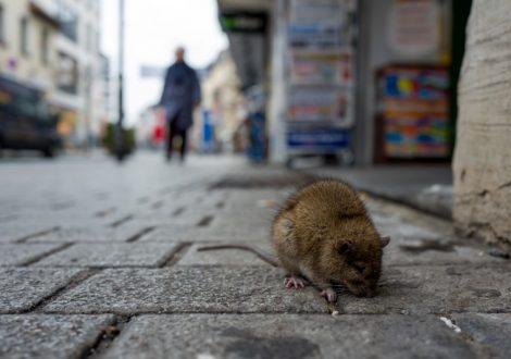 RATdanslesruesenville